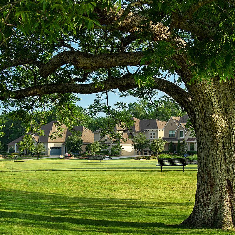 Tree lo-res